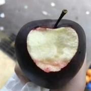 黑苹果苗批发