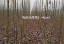 八棱海棠种籽