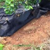 防草布—可降解防草布