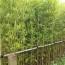 2.5米黄金竹批发价格 福建黄金竹多少钱一棵