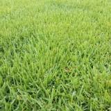 中华结缕草草坪价格 中华结缕草坪多少钱一平方?
