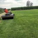 早熟禾草坪 多種草坪批發