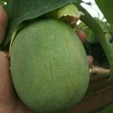 绿皮百香果苗哪里有卖?新品种绿皮百香果苗供应