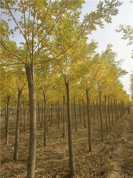 黃金槐低價處理 土地升級急處理