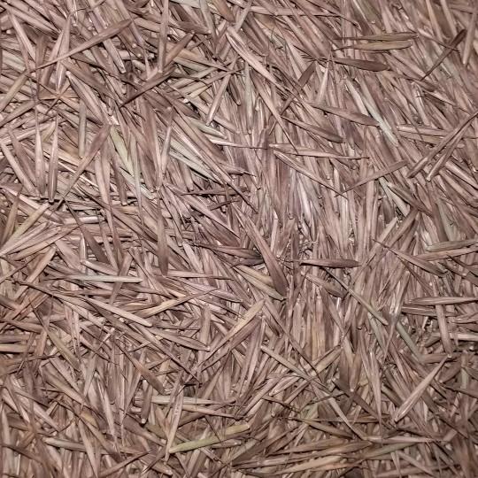 毛竹楠竹种子竹米(按公斤计)