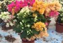 花卉专用水处理设备