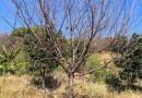 大田灌溉 草坪綠化 移動噴灌 地插支架 園林綠化 噴頭套裝 1.0米 修改