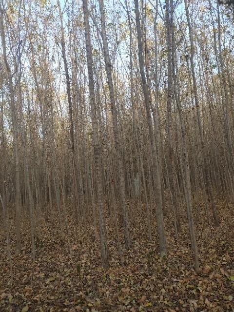 榆树树苗价格 榆树基地批发