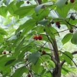 河北构树出售价格 构树基地直销