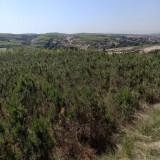 2米樟子松树价格 基地批发樟子松苗价格