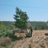 山东5米油松大量供应 一手货源