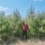 山东3米油松一手货源 油松价格