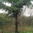 1米2米董棕批发 福建董棕树苗种植基地
