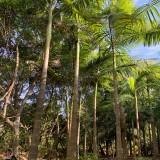 高7米假槟榔树价格 高8米假槟榔基地批发报价