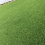 江苏百慕大草坪价格 百慕大草坪种植基地出售 厂家直销