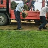 草皮早熟禾价格 哪里有卖早熟禾 批发