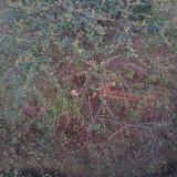 1米火棘球价格 1点5米火棘球图片价格
