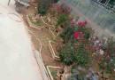 美国紫薇10公分价格 江苏美国红紫薇市场行情