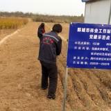 大红袍花椒苗哪里有卖 韩城大红袍花椒苗基地批发