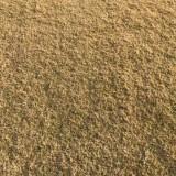 安徽百慕大草坪哪里有卖 滁州百慕大草坪价格