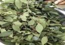 朴树种子价格多少钱一斤 朴树种子市场价格