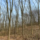 无患子树价格是多少 无患子树价格