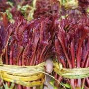 香椿树苗价格   香椿树苗批发供应