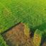 百慕大草价格 矮生百慕大草坪多少钱一平方
