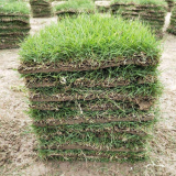 天堂草坪价格  基地矮生百慕大草坪多少钱一方