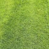 四季青草坪多少钱一平方 四季青草坪价格