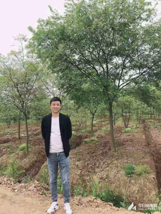 15公分樸樹多少錢一棵 安徽15公分樸樹1200元