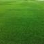 黑麦草草坪一平方批发价格多少钱