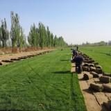 黑麦草多少钱一平方米 黑麦草基地批发